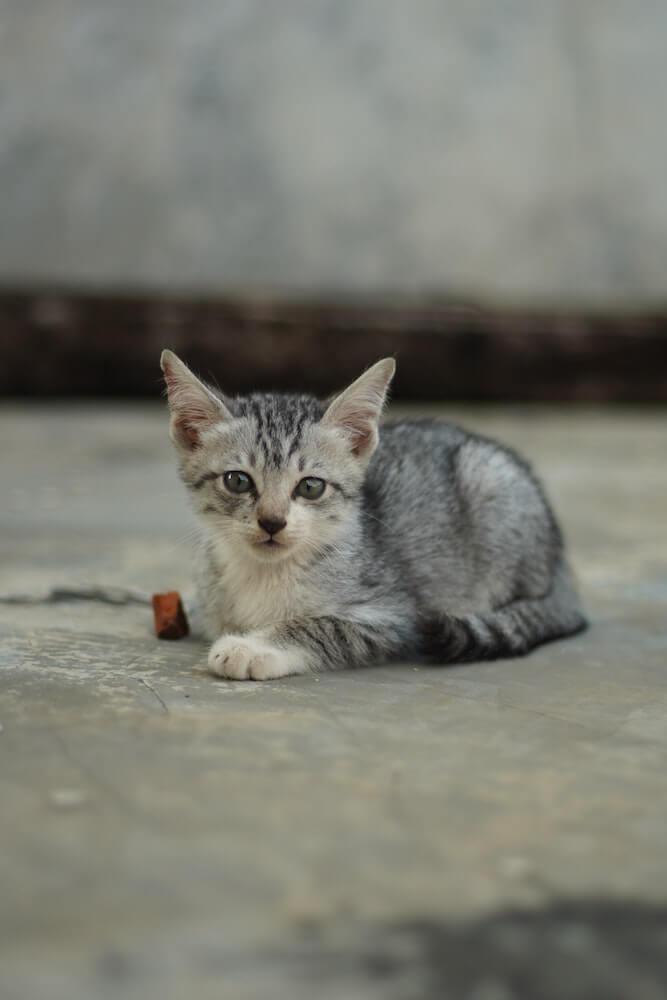 路上にたたずむ野良猫(子猫)のイメージ写真