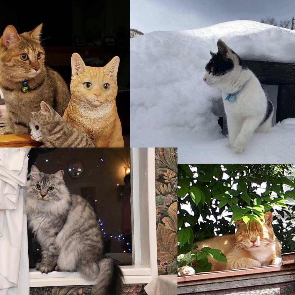 宿泊施設の看板猫人気ランキング