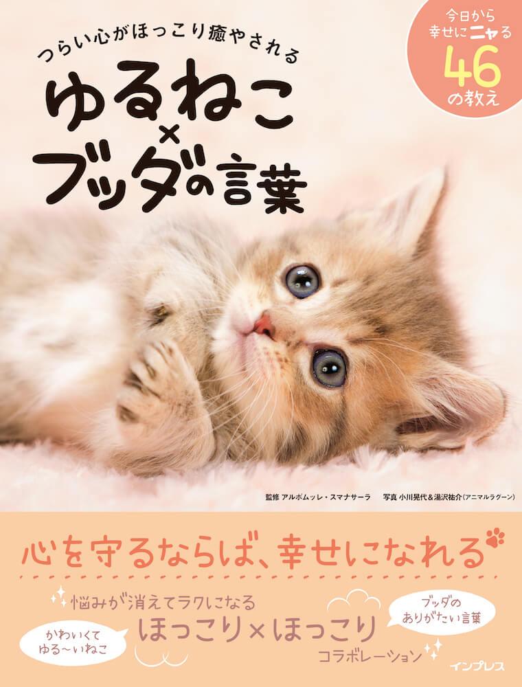 仏陀の教えを学びなら猫の写真で癒されるフォトブック「 ゆるねこ×ブッダの言葉」表紙イメージ