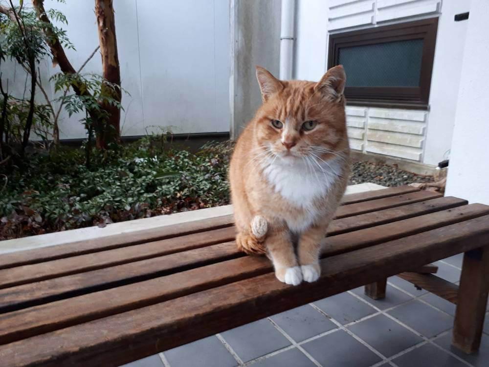 下呂温泉のニコニコ荘で暮らす看板猫の「チビ」