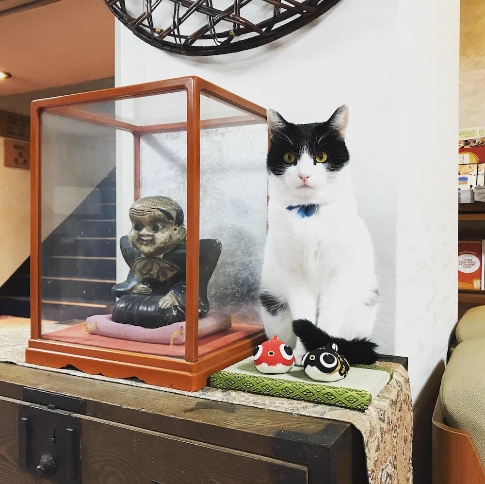 野沢温泉の桐屋旅館にいる看板猫のハチワレ猫「ハチ」