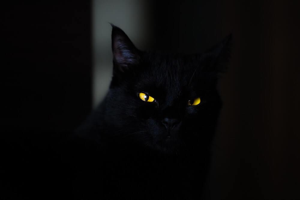 暗闇に黄色の目が光る黒猫のイメージ写真