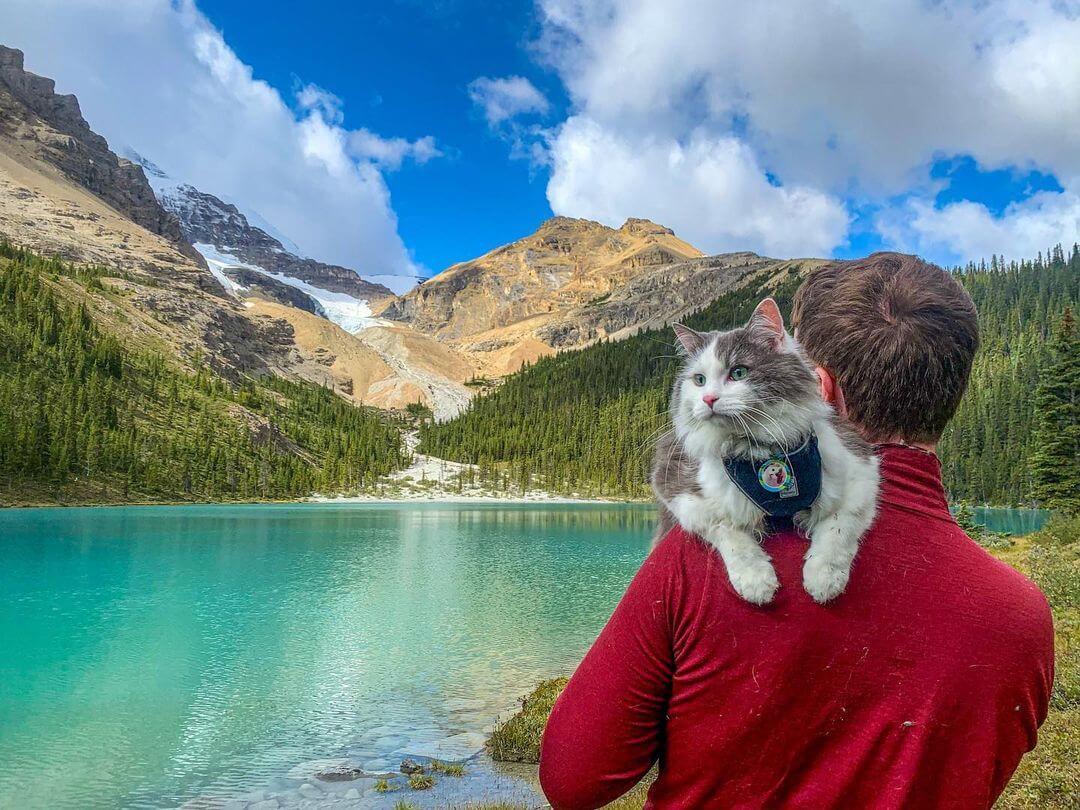 飼い主さんに抱っこされてハイキングをする猫のゲイリーくん