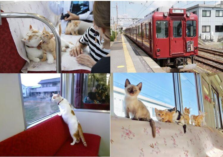 養老線の走る電車の中で猫と触れ合える「ねこカフェ列車」 by 養老鉄道