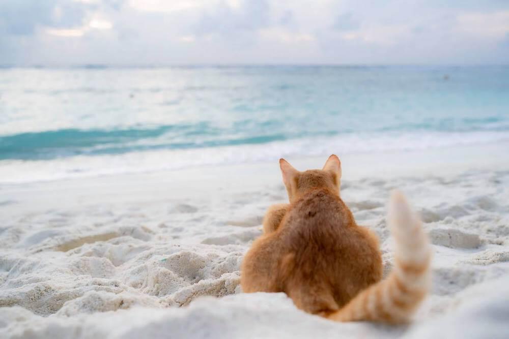 砂浜に座って海を眺める猫の写真 phoo by 町田奈穂