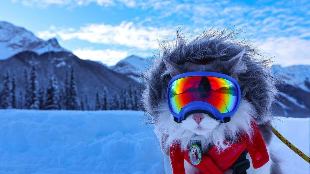 スキーゴーグルを装着した猫のゲイリーくん in カナダ キャンモア