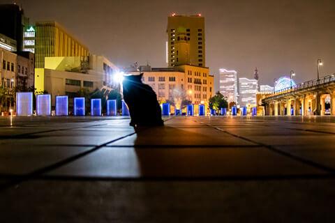 横浜の夜景を背景にした猫の写真 phoo by 信清正充