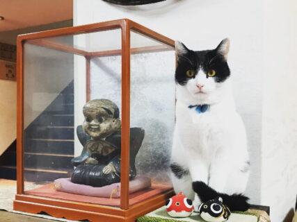 会ってみたい宿泊施設の看板猫ランキング!従業員やお客さんを癒やしてくれる魅惑の猫たちを紹介