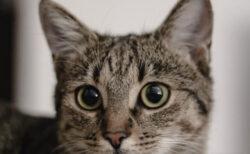 愛猫のがんと向き合うにはどうすれば…?ねこ専門医・服部幸獣医師のセミナーが4/17に開催