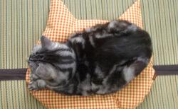 猫がスッと座りたくなる!?羽毛製品メーカーが猫のために開発したこだわり仕様の座布団「猫のしあわせ座布団」