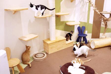 店内には保護猫との出会いの場も完備!ペット用品の通販サイト「ペピイ」がリアル店舗をオープン