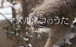もふもふのネコ科動物がミュージックビデオに!那須どうぶつ王国が「マヌルネコのうた」を公開