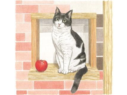 SNSの人気猫がニャンと塗り絵に!おとなのスケッチ塗り絵シリーズ 最新刊『おとなのスケッチ塗り絵 かわいい猫 癒しのもふもふ大集合!』のテーマは猫