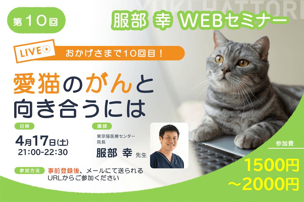 ねこ専門医・服部幸獣医師のWEBセミナー「愛猫のがんと向き合うには」メインビジュアル