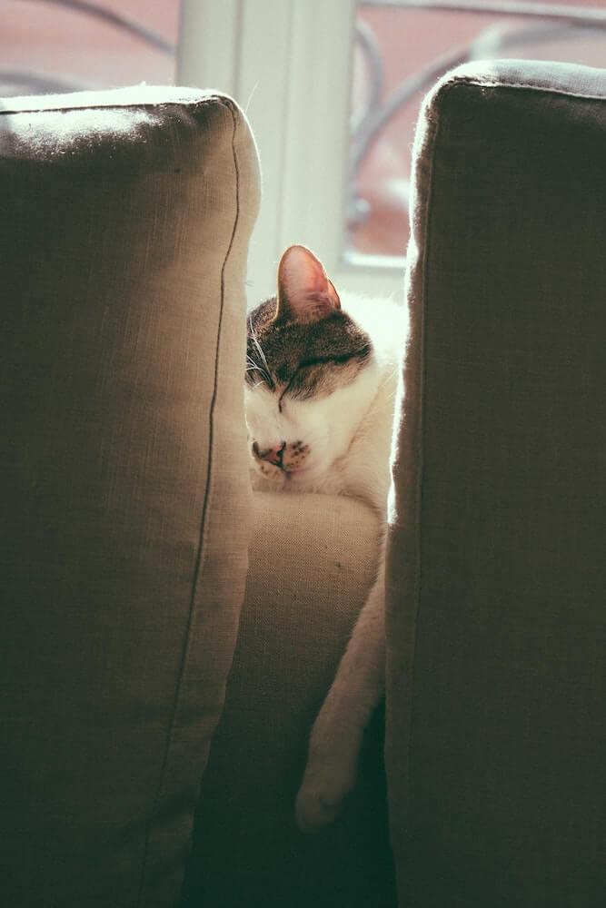 ソファで眠るネコのイメージ写真