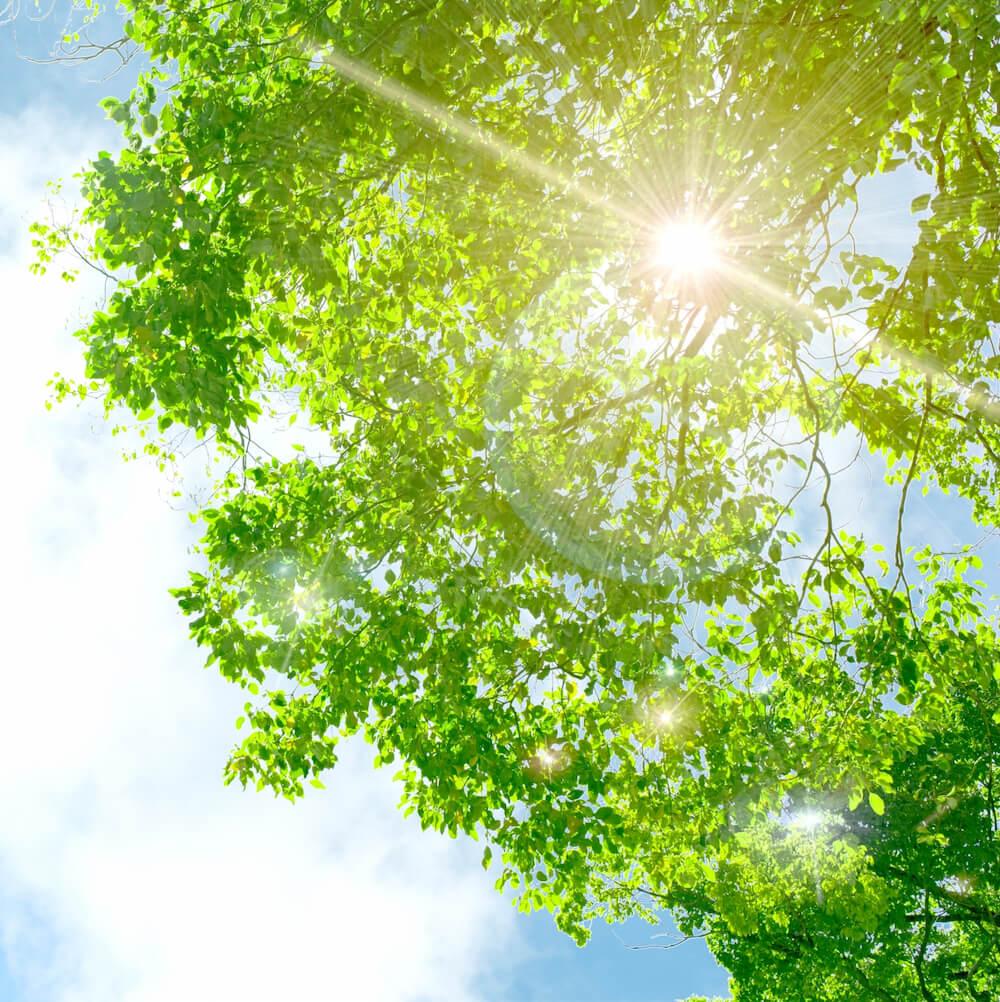 初夏の日差しのイメージ写真
