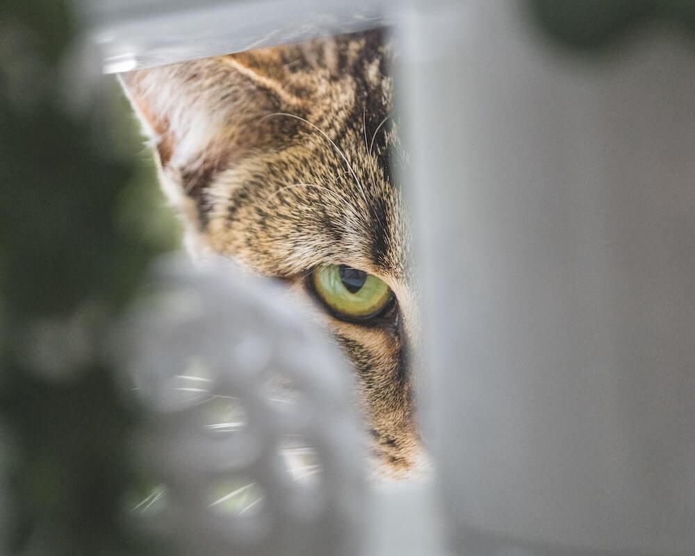 物陰から覗く猫のイメージ写真