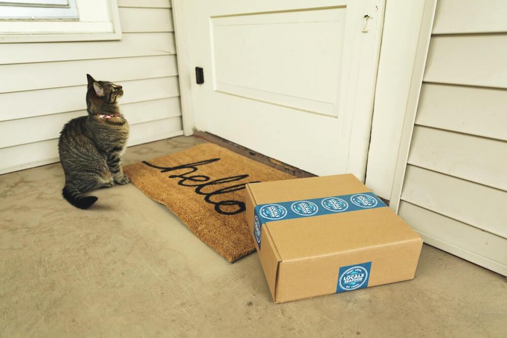 家出から帰ってきた猫のイメージ写真