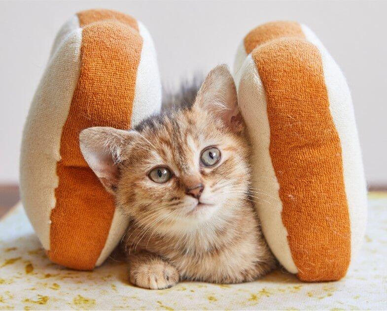 サンドイッチ・チェーン、サブウェイのエイプリルフールネタ『子猫サンド』