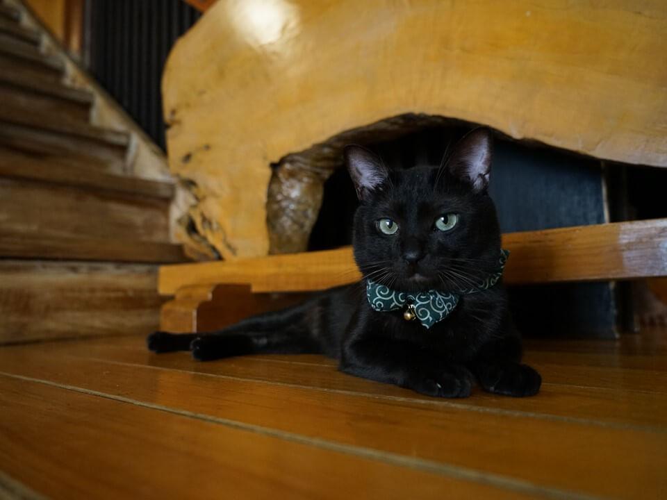 旅館で暮らす黒猫 by 旅猫ロマン「お宿の猫1」