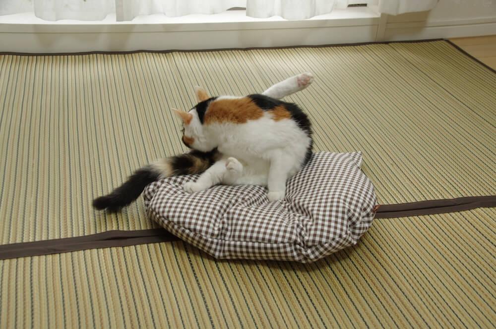 猫用の羽毛座布団「猫のしあわせ座布団」で毛づくろいをする猫のイメージ by Jumou