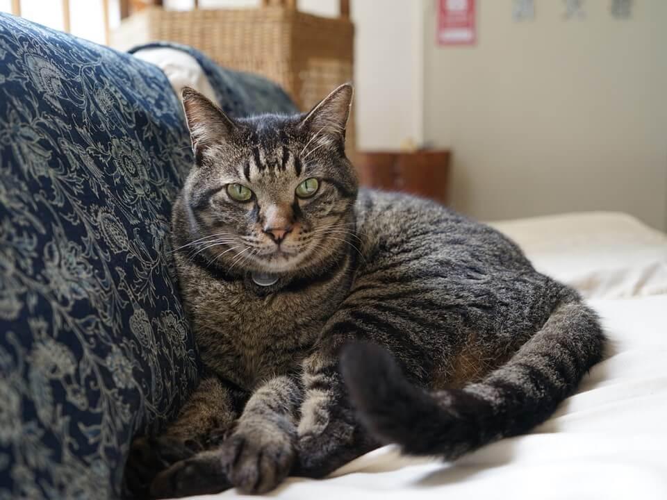 旅館のソファでくつろぐキジトラ猫 by 旅猫ロマン「お宿の猫1」
