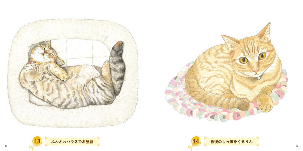 ヘソ天&しっぽを丸めて座る猫の塗り絵