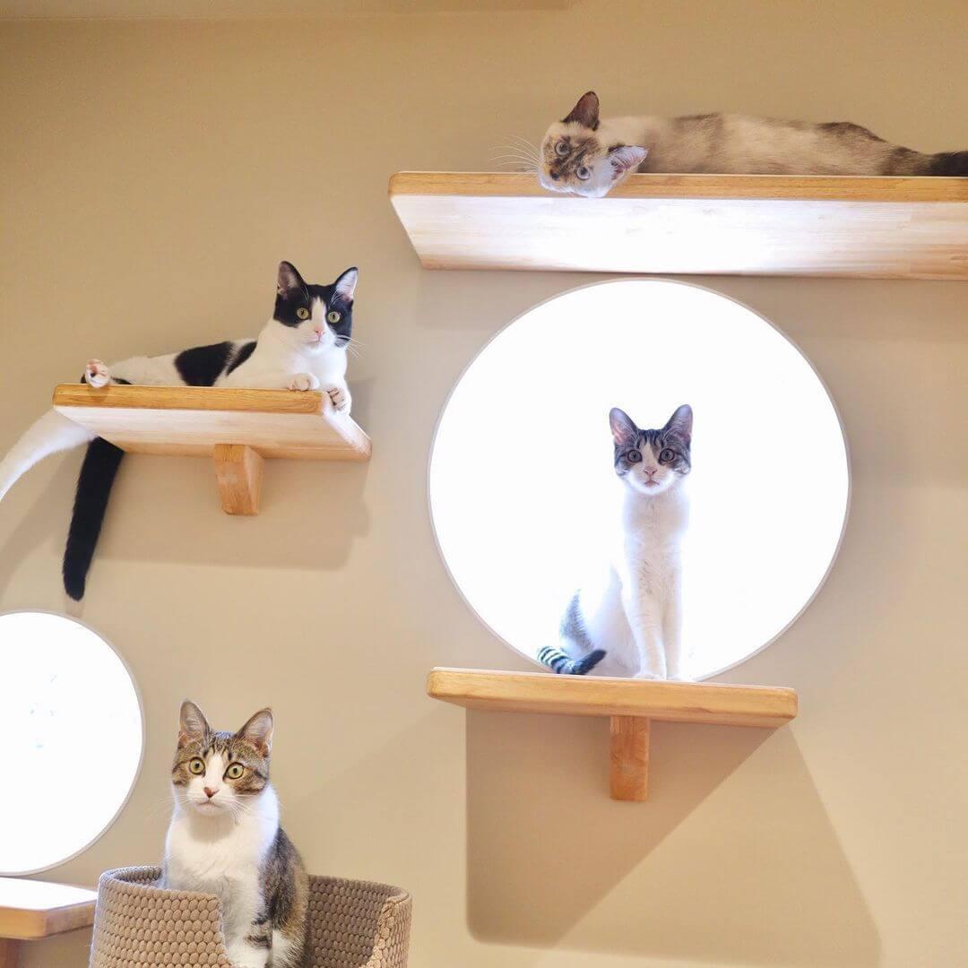 「猫のロンパールーム」で里親との出会いを待つ保護猫たち in PEPPY SPACE(ペピイスペース)