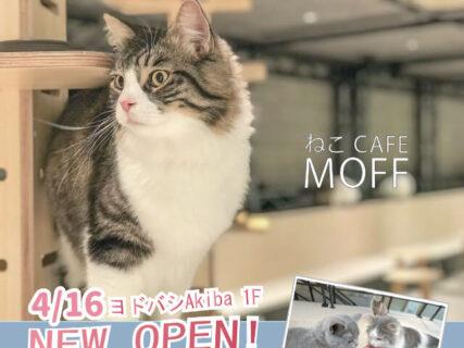 秋葉原のヨドバシ1階に猫カフェMOFFがオープン!横浜には屋内型アニマルテーマパークも