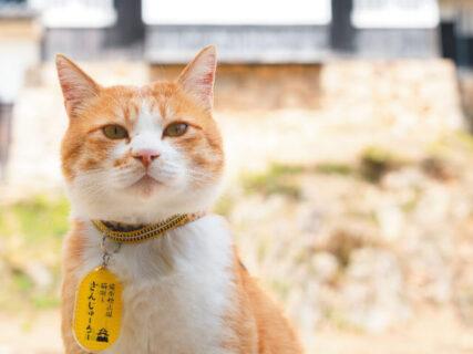 観光客にも愛される備中松山城の猫城主さんじゅーろー、地元企業との可愛いコラボグッズを発売