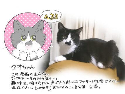 猫あるあるなエピソードが満載!マンガ家と飼い猫の日常を描いた書籍「猫も杓子もタオ日記」