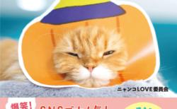 猫の顔出しパネルを作れる塗り絵つき!顔ハメした猫の写真集「むぎゅっとニャ!はめ猫」