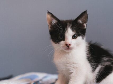 猫のオシッコに血が混じっているか検査できる測定器 「PetEye1(ペットアイワン)」