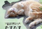 自然スポットに隠れた猫のステッカーを探そう!川崎市多摩区がSNSキャンペーンを開始