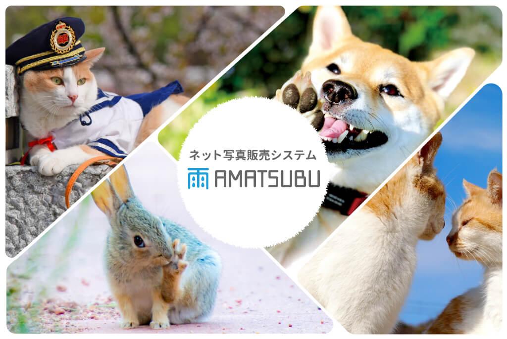犬猫の写真&グッズ販売を簡単にできる写真販売システム「AMATSUBU(あまつぶ)」メインビジュアル