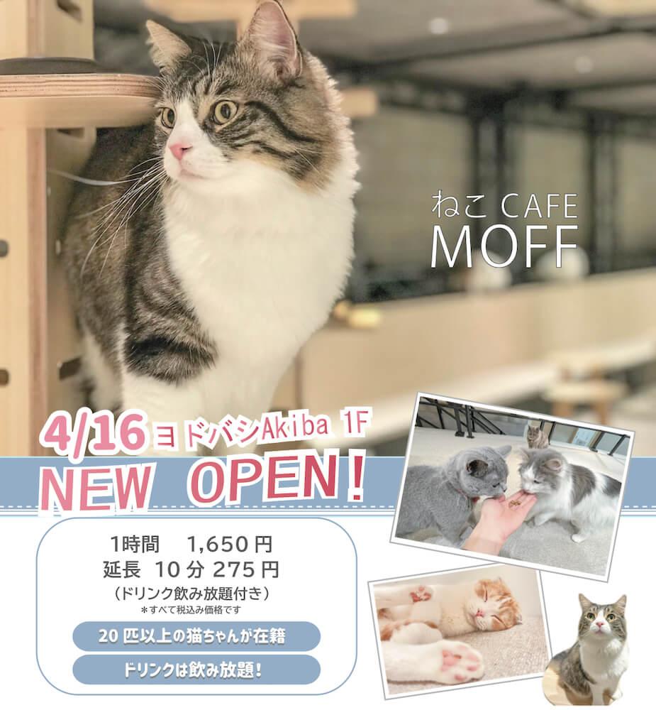 秋葉原の猫カフェ「ねこCAFE MOFF」 in ヨドバシAkiba