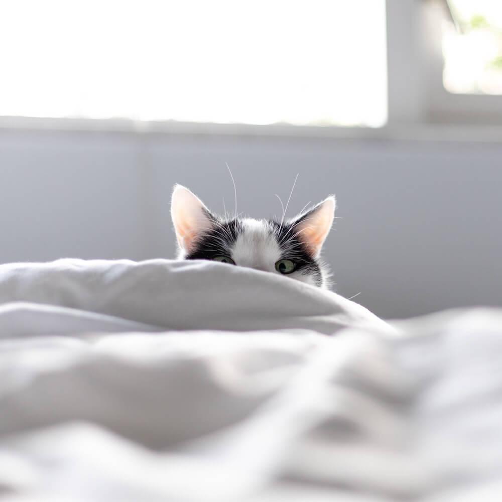 布団のかげに隠れているつもりの猫のイメージ写真