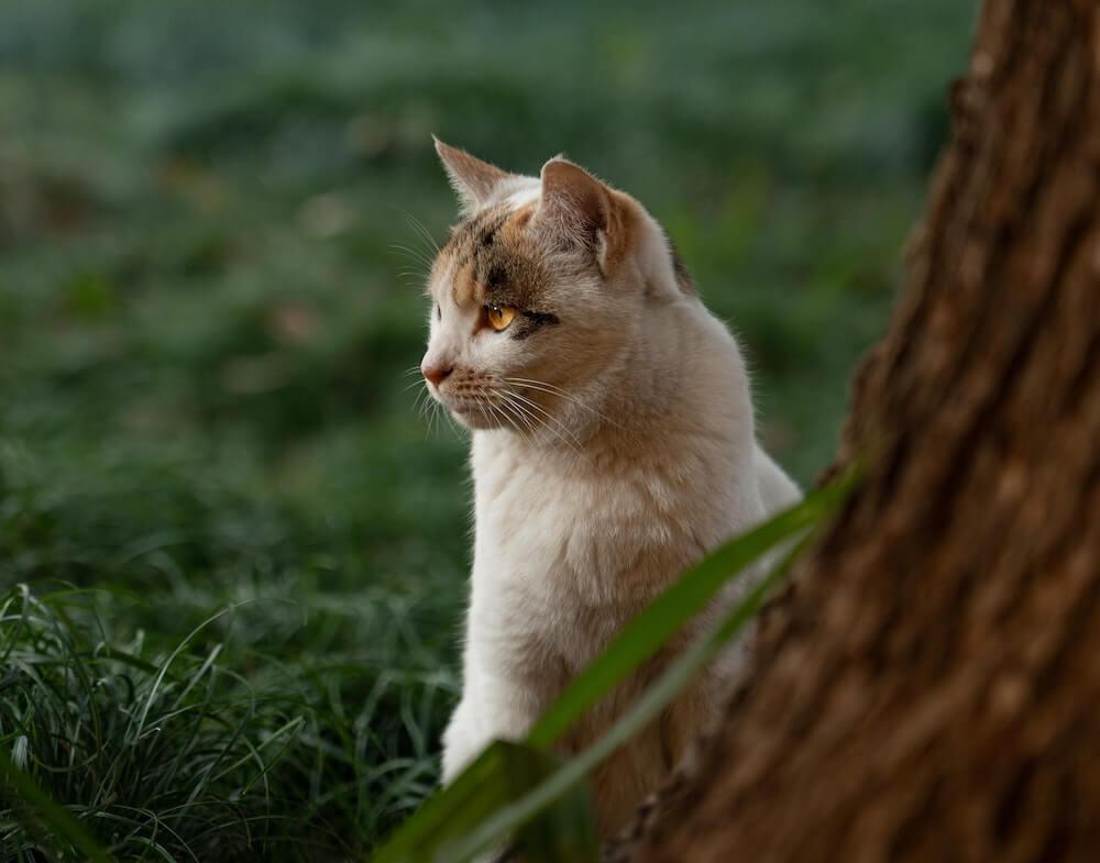 鋭い視線を向ける外猫のイメージ写真
