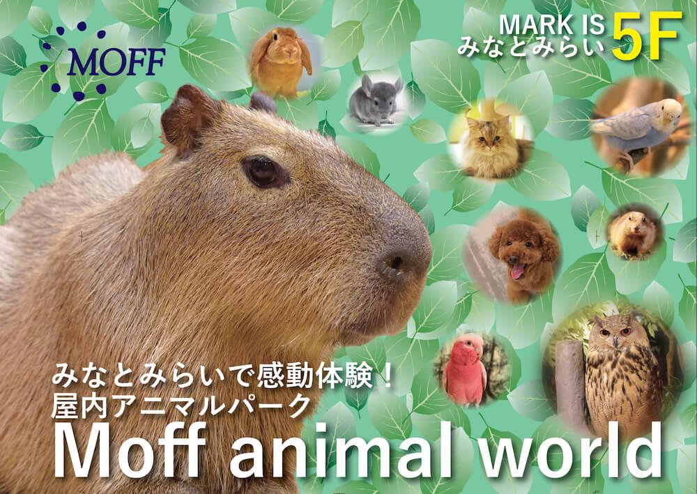横浜にある屋内型のアニマルテーマパーク、Moff animal world(モフ アニマル ワールド)MARK IS みなとみらい店