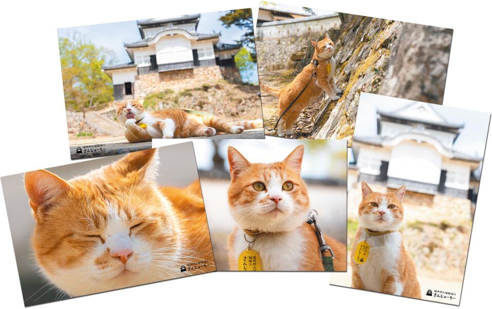 備中松山城の猫城主「さんじゅーろー」のポストカード