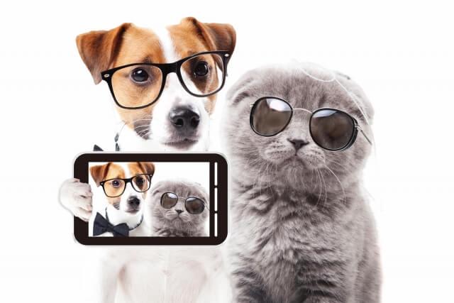 メガネやサングラスを掛けた犬猫の写真