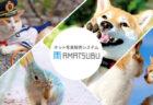 猫フォト、猫グッズの販売を簡単に!写真販売システム「AMATSUBU(あまつぶ)」