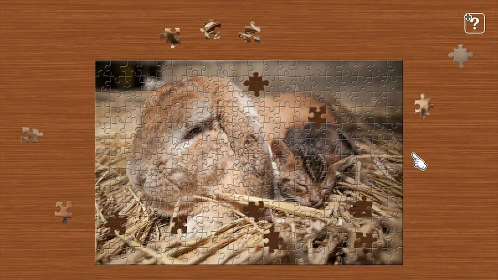 ウサギと子猫が一緒に寝る写真を使ったジグソーパズル by ジグソーマスターピース