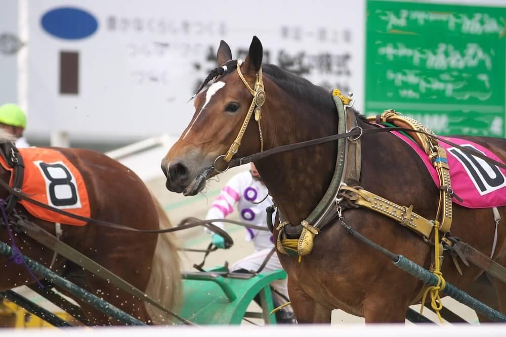 競馬のイメージ写真