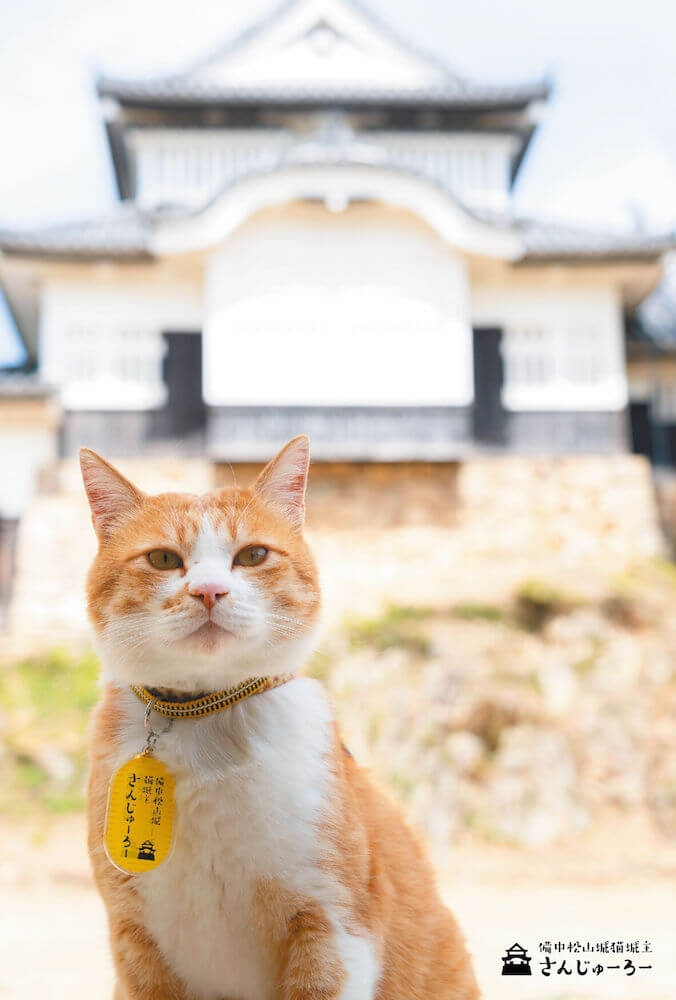 備中松山城を背景にした猫城主「さんじゅーろー」近影