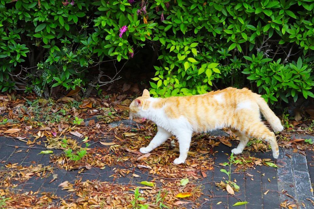 日本の野良猫のイメージ写真