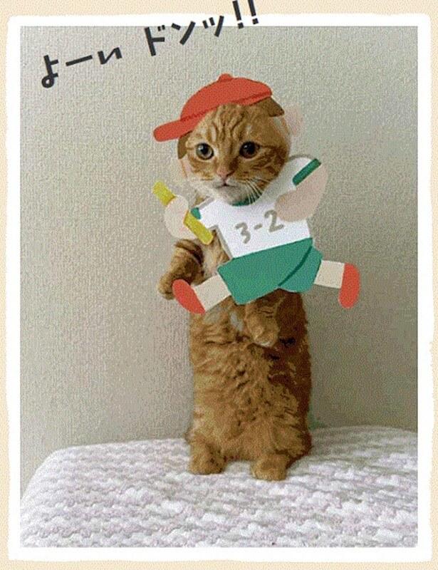猫の顔出しパネル(はめ猫)が作れる写真集「むぎゅっとニャ! はめ猫」表紙イメージ