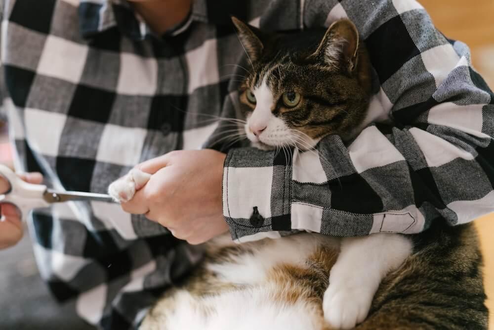 猫の爪切りイメージ写真