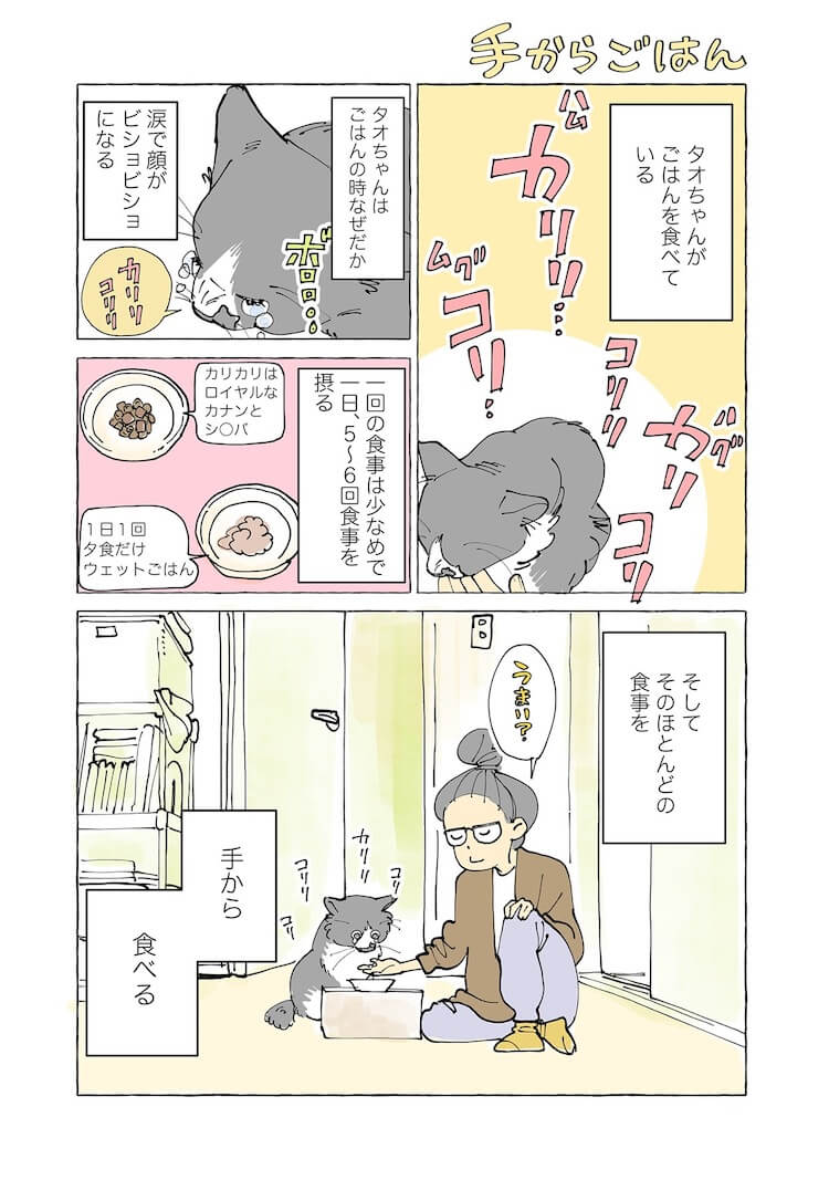 飼い猫の手からしかご飯を食べない猫1 by 漫画家、ねこと暮らす ~猫も杓子もタオ日記~のワンシーン