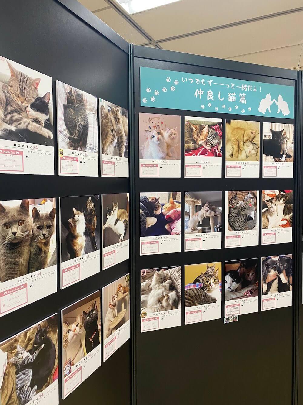 猫の写真展示やグッズ販売を行う企画展「ねこにすと(NEKO-NIST)」第34回の開催風景